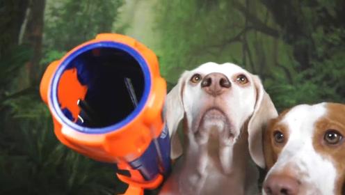 """趣味游戏:小伙带狗狗玩""""神奇宝贝"""",网友:满满的回忆!"""