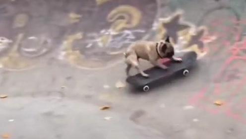 搞笑视频:狗子这滑板玩得太溜了 真是活得不如狗啊
