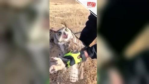 警察救助被卡在栅栏上的猫头鹰 猫头鹰浑身僵硬一脸错愕