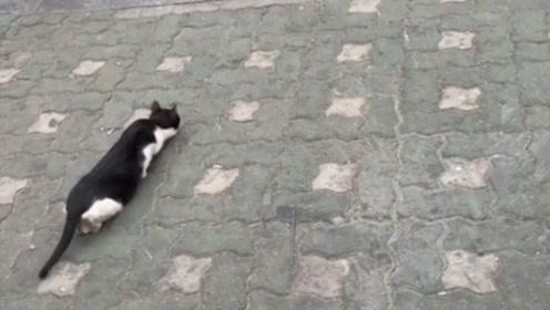 一看猫咪这姿势,我就知道前方肯定有情况,一定看到最后!