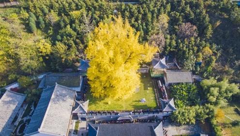 世界最美的几棵树,我国也有一颗,由大唐皇帝李世民亲手种下