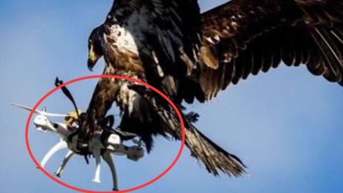 小伙拿无人机航拍雪山,不料半路被老鹰突然劫走,摄像机全程记录下来