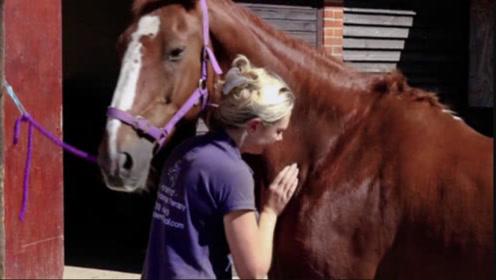 主人给马进行全身按摩,马竟然露了个笑脸,镜头记录全过程