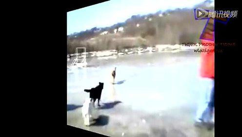 冬趣 萌猫呆狗水上滑冰乐翻天