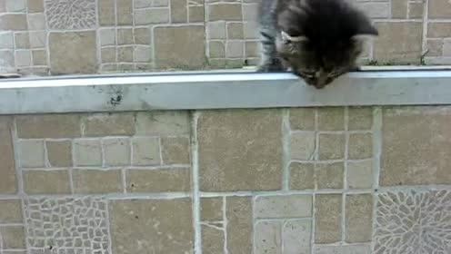 小猫出门冒险遇到楼梯,才走两阶就被妈妈抓回去,太可爱了!