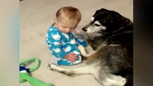 这个画面太暖了!宝宝慢慢睡着了,最后抱住了身边的大狗狗