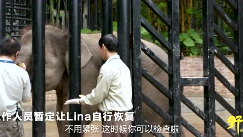 给5吨重的大象修脚 需要怎样的指甲刀