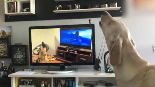 狗狗们之间传递谣言的方式,最后金毛的表情亮了:谣言止于智者!