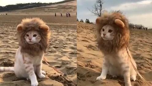 狮王出巡啦!你们看看帅不帅!萌翻了!