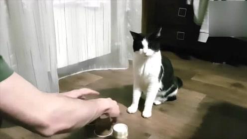 高智商宠物 会自己开门喝水接电话