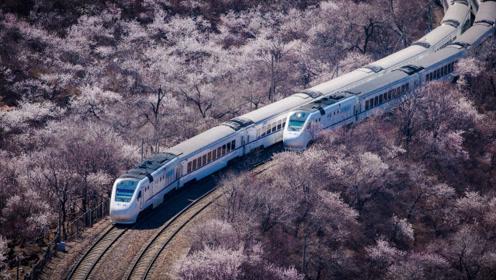 不必去日本 北京城外的花海列车景色更胜一筹