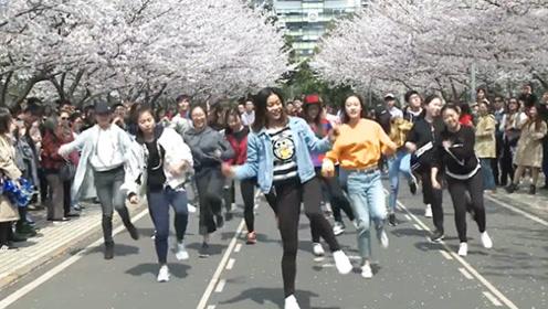20位校园女神樱花树下跳C哩C哩,人美、花美、景美