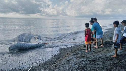 """菲律宾海滩惊现长毛""""海怪""""尸体 居民惊恐说是不祥预兆"""