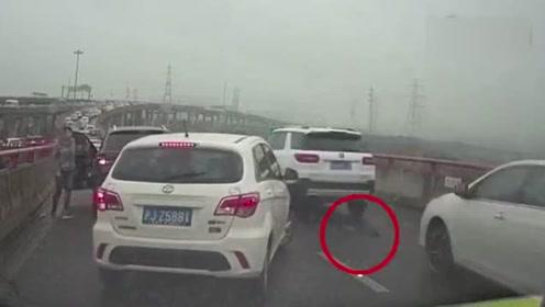司机高架桥上停车救猫 这种行为该不该称赞