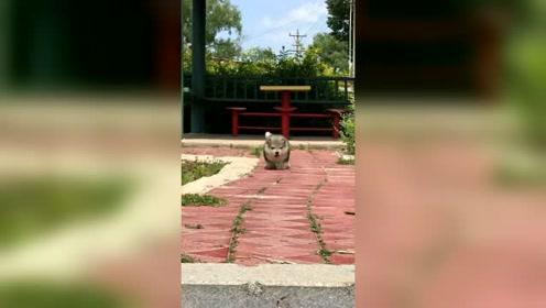 这条小狗狗的底盘有点低啊!