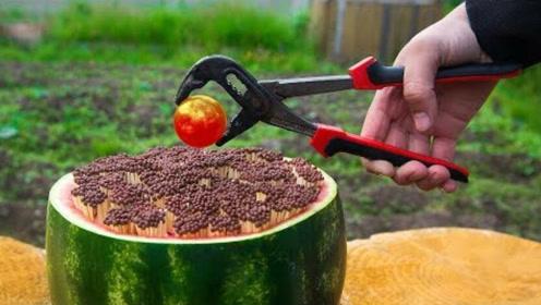 实验:10000根火柴插进西瓜里,点燃会发生什么?