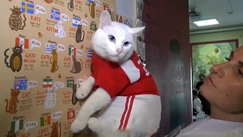 预言界后起之秀  世界杯预测章鱼保罗的继承者猫咪Achilles