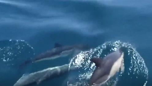 英海湾现100余只海豚 不时与游客亲密互动