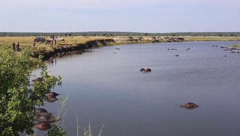 浮尸满河!400多头水牛被狮群追赶 跳入河中被淹死