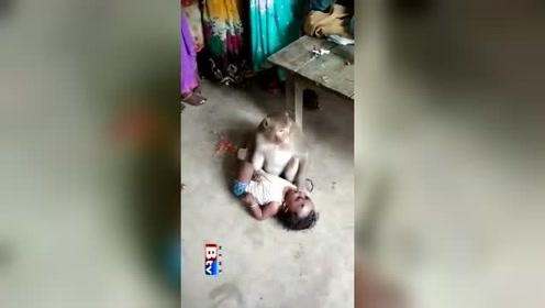 光天化日竟然抢别人婴儿,这猴子以为自己是齐天大圣嘛