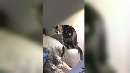哈哈哈哈,你们都可以一起打架了,现在的猫都太聪明了