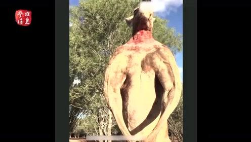 """""""袋鼠施瓦辛格""""去世享年12岁 肌肉发达能徒手压扁铁桶"""