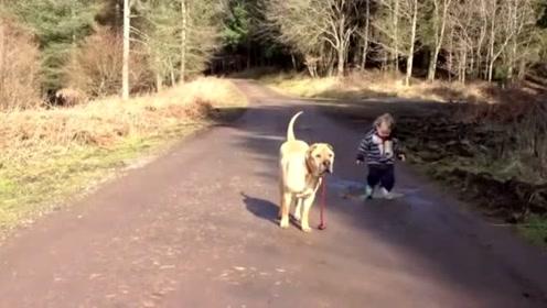 当2岁萌娃遛大狗看到一个水坑后的举动 连狗都一脸懵