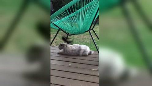 兔子和鸟嬉戏玩耍