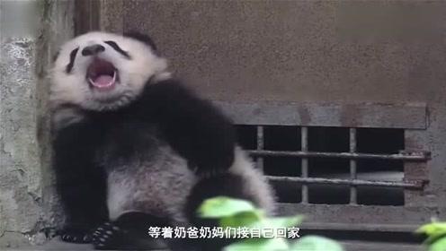 靠在铁门边上打呵欠的熊宝宝被吓到,饲养员真是,不带这样吓熊的
