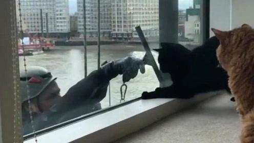 悬空人猫情!洗窗工用清洁工具当逗猫棒逗猫 还隔窗求亲亲