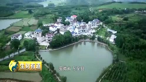 东至县有地域特色的农产品,竟然是菊花?