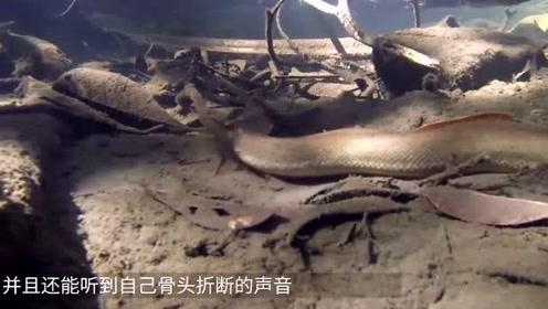 亚马逊河中最可怕动物,数秒干掉一头牛,遇上后只能凉凉!