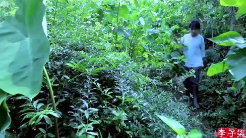 美食李子柒:诗一般田园生活,寻找大山深处绿色食材,回归本土美食!