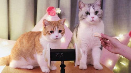 假装有猫系列!猫咪在你耳边呼噜助眠,让你秒睡的耳朵按摩