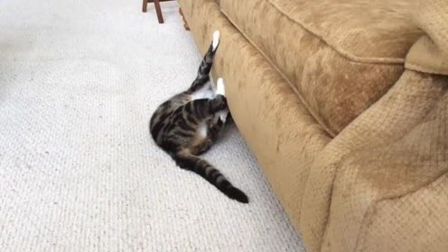 见到大猫对沙发这么上心 铲屎官内心估计又要凉凉了 沙发保不住了