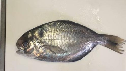 浑身呈现银色的小鱼,身上的条纹像叶子脉络,近看很漂亮
