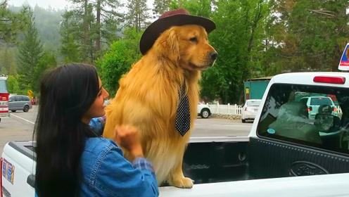 狗狗也能当镇长?每天专车接送,与游客居民互动拍照简直狗生赢家