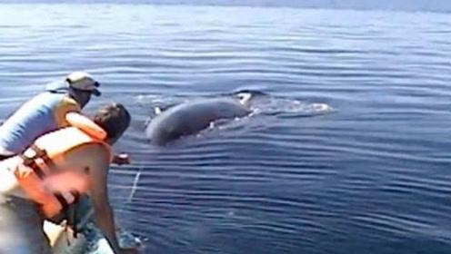 善良渔民解救被困鲸鱼,获救后鲸鱼欢快离去
