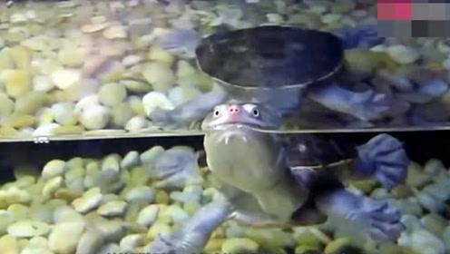 男子捕获只小乌龟,同事看后却让他赶紧报警