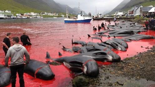 日本人捕杀一头蓝鲸,利润到底有多高?答案远超常人想象!