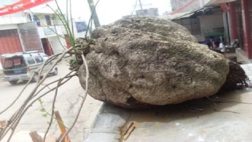 """贵州发现巨型""""山乌龟"""",专家鉴定后要300块买走,路人怒了!"""