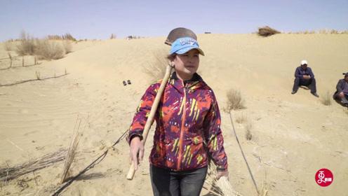 """植树治沙14年,身患重病仍坚持,这个新疆美女堪称""""沙漠玫瑰"""""""