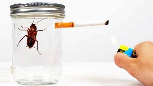 连续抽一包烟的危害有多大?老外用小强来测试,结果心服口服