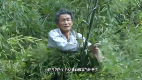 现实版轻功?浙江60岁老人能在竹林上游走,网友:666