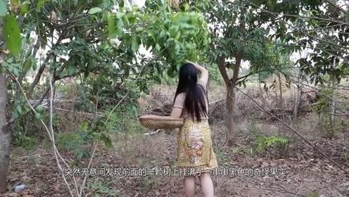 女子野外探险,发现树上挂满黑色果实,靠近一看吓到了