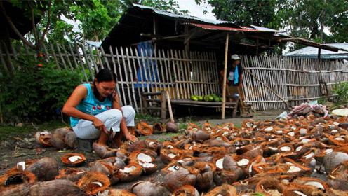 为什么椰汁的味道那么好,而同样来自椰子的椰子水却不好喝呢?