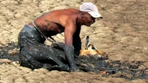 黑人小哥偶遇羚羊深陷淤泥,上去就是往上拖,结果意外发生