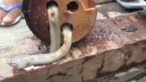男子河里捡到奇怪木头,打开后真是赚大了!