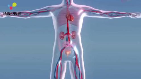 人体少一个肾,会对生活有什么影响?看完让人一阵后怕!