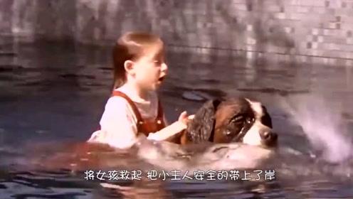 女孩不慎落水,狗狗不顾危险将其救起,镜头记录感人全程!